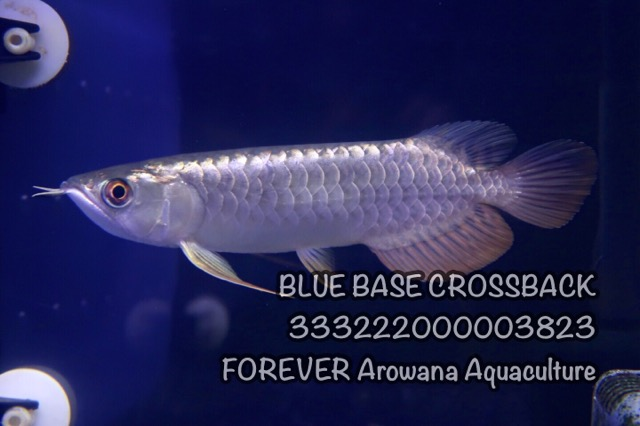 9AF5775F-C4D5-48B3-BD3F-0DAF488EA3E9.jpeg