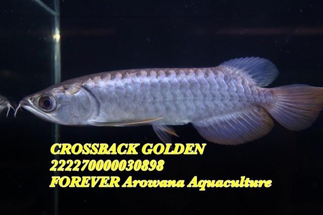 0681F013-7321-4973-98B2-C2DB3B6CAF1C.jpeg
