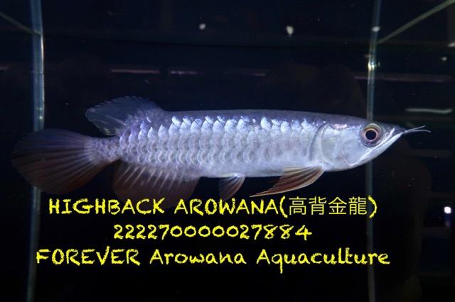 6E2A895D-C279-4A41-9751-643699C6A5E9.jpeg