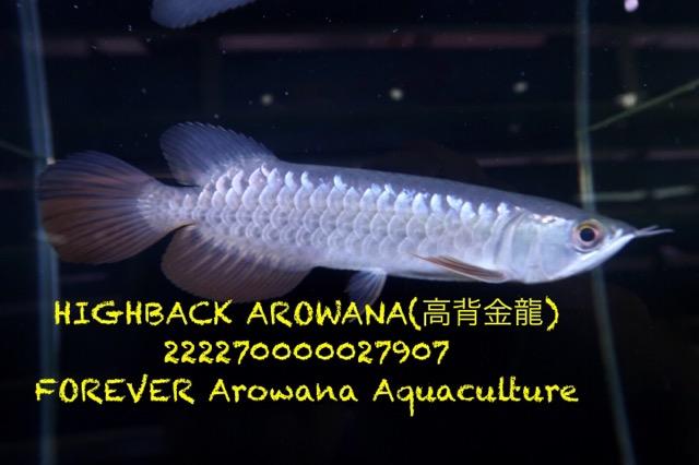 D44C5A05-D038-43D8-B2F4-38442370CE31.jpeg