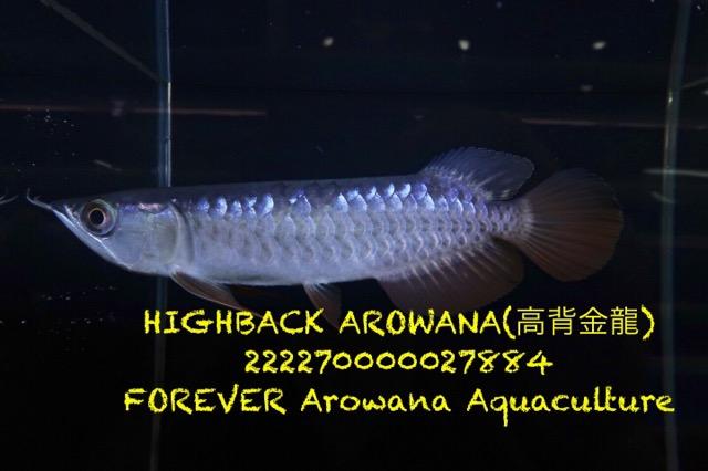 D592B875-72A3-440A-B08A-1991AD822517.jpeg