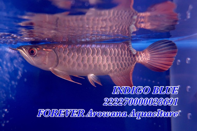 FB5A0C1D-FABE-48DA-A78E-FED71FB38786.jpeg